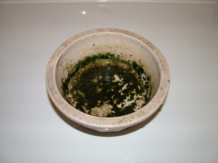 Dish Before
